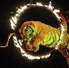 Цирки в Карауле