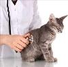 Ветеринарные клиники в Карауле